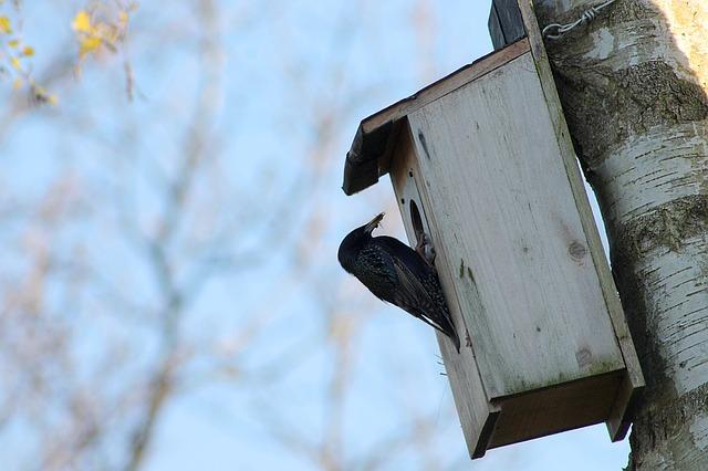 Maak je tuin vogelvriendelijk