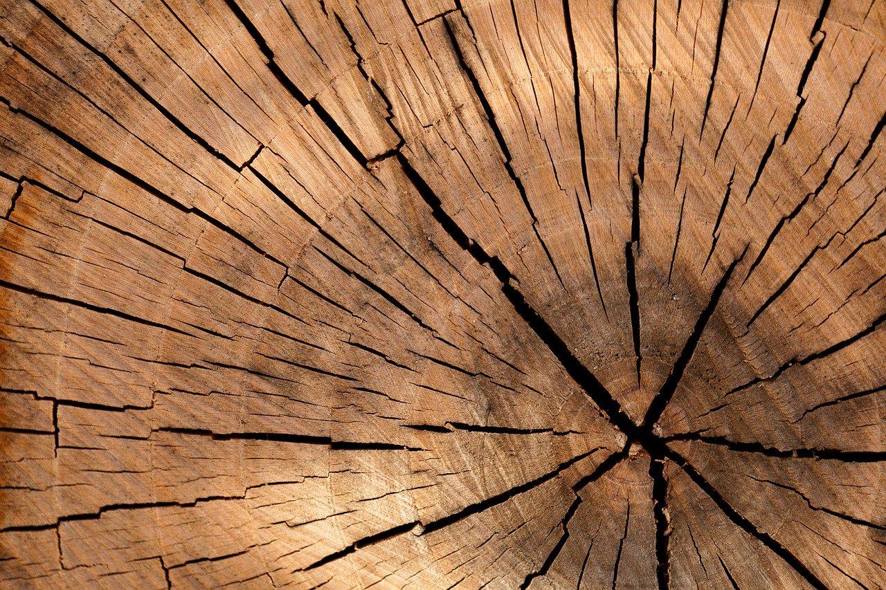 De autoriteit op het gebied van houtproducten: Nobelhout!