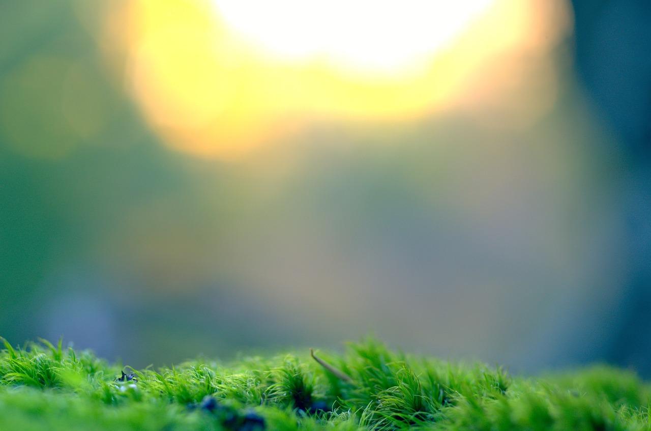 Een steentje bijdragen aan het milieu: duurzame palmolie