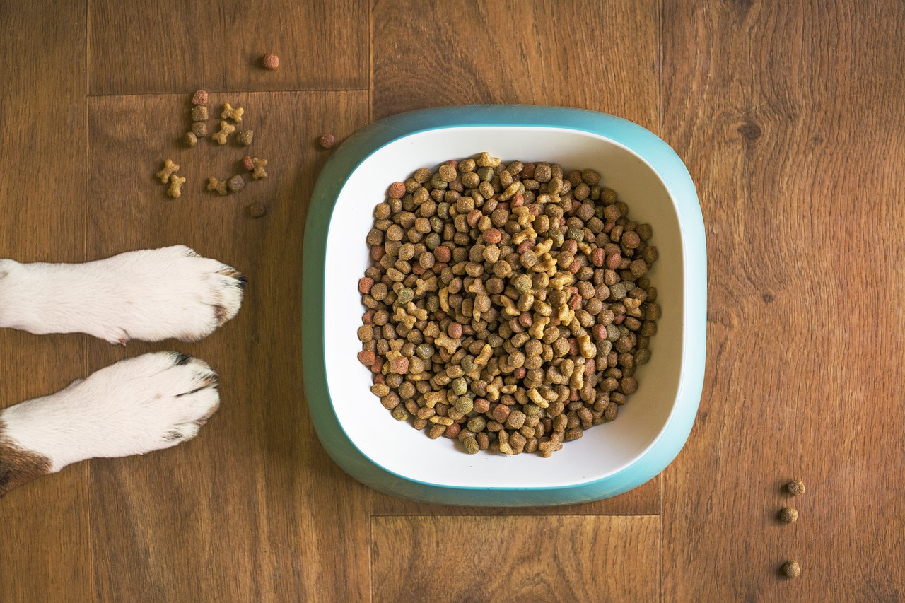de combinatie van hondenvoer met insecteneiwit